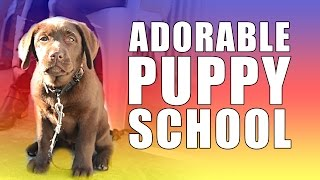 Adorable Puppy School Fun!