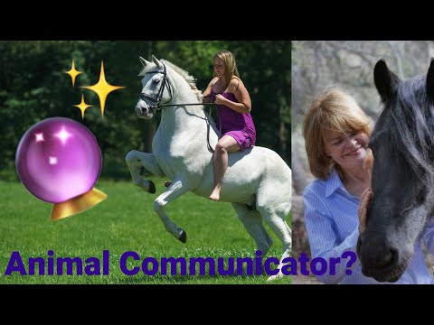 An ANIMAL COMMUNICATOR does a reading on my horse?!