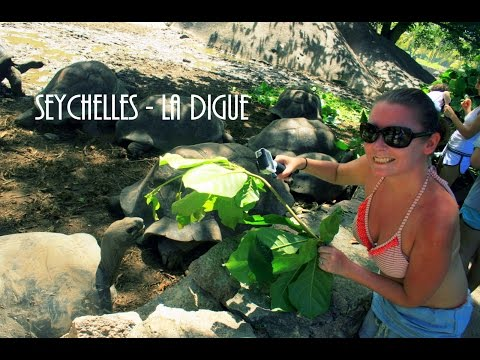 Seychelles - La Digue - L'union Estate - Turtles - GoPro Hero 4 Black