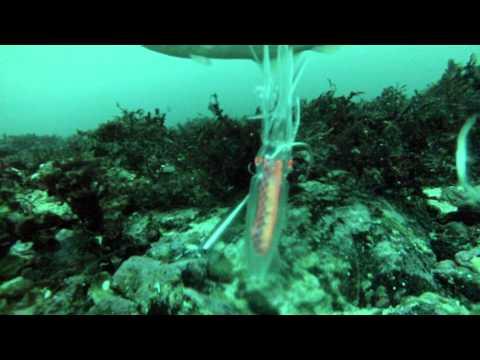 Norway fishing 2013 (underwater video by gopro hero3)