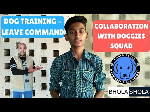 Pet Care - Dog Training Leave Command - Collaboration with Doggies Squad - Bhola Shola