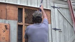 "Honey Bee Removal 101 ( ""A-Z"") With JPthebeeman"