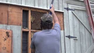 Honey Bee Removal 101