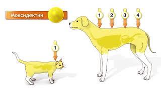 Bayer Advocate Адвокат капли на холку для собак и кошек - www.myaw.by