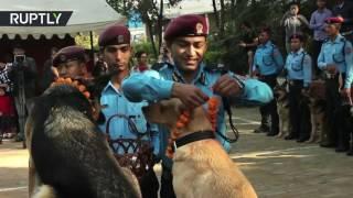 Полицейских собак Непала отблагодарили за верную службу
