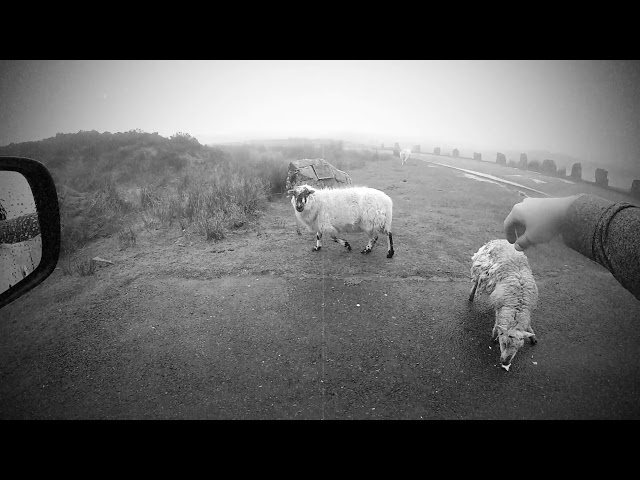 SHEEP movie | Wales tour | Bluemarblevagabonds