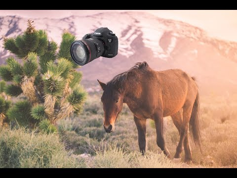 Photographing Wild Horses in Cold Creek