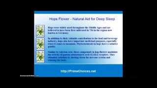 Natural Aid for Deep Sleep - Hops Flower