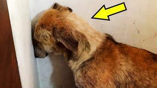 Собака постоянно смотрела в стену и отказывалась от еды. Что с ней произошло?