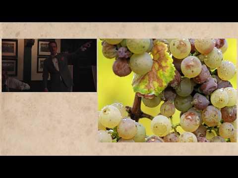Michael Meagher 1.2 – Bordeaux Red Wines, Left Bank, Right Bank, plus Sauternes