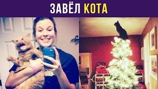 Приколы с котами. Завёл кота | Мемозг #62