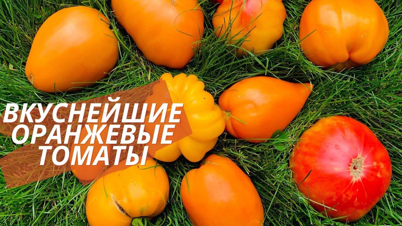 Обалденные золотые томаты. Лучшие оранжевые томаты в моей коллекции.