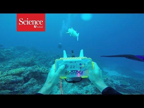 Snippet: Watch A Robotic Fish Swim