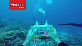 Snippet: Watch a robotic fish swim