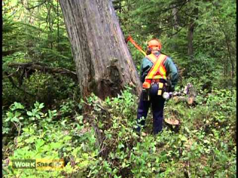 BC Faller Training Standard - Heavy Lean  (12 of 17)