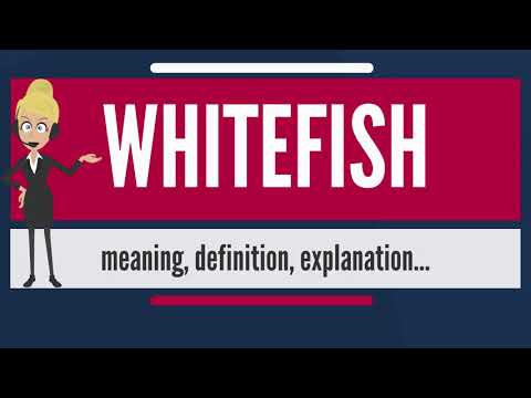What Is WHITEFISH? What Does WHITEFISH Mean? WHITEFISH Meaning, Definition & Explanation