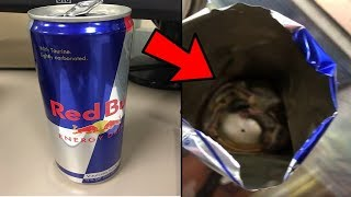 LE DANGER DU REDBULL, MONSTER ENERGY ETC...