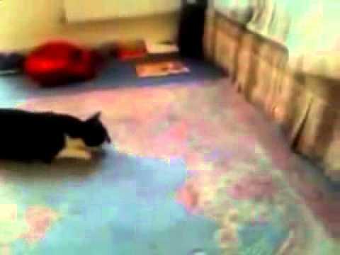 Funny Cats Stupid Cat
