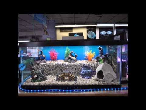 Cool aquarium for home decoration setup ideas with for Aquarium decoration set