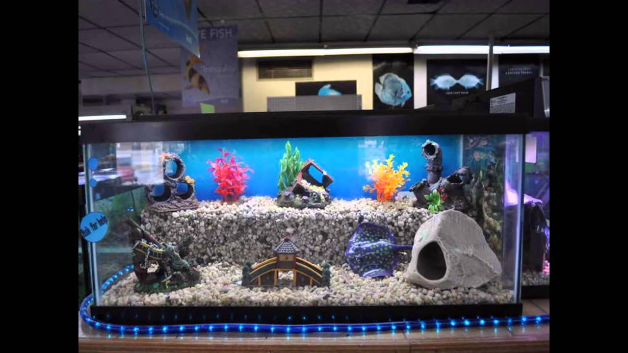 Cool Aquarium For Home Decoration Setup Ideas With