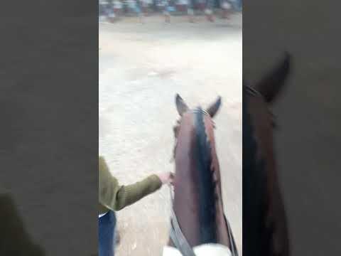 R. D ZALA 🐴 HORSE RIDING CLUB