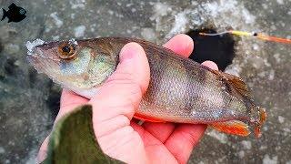 ПЕРВОЛЕДЬЕ открытие сезона подледной рыбалки 2019 2020