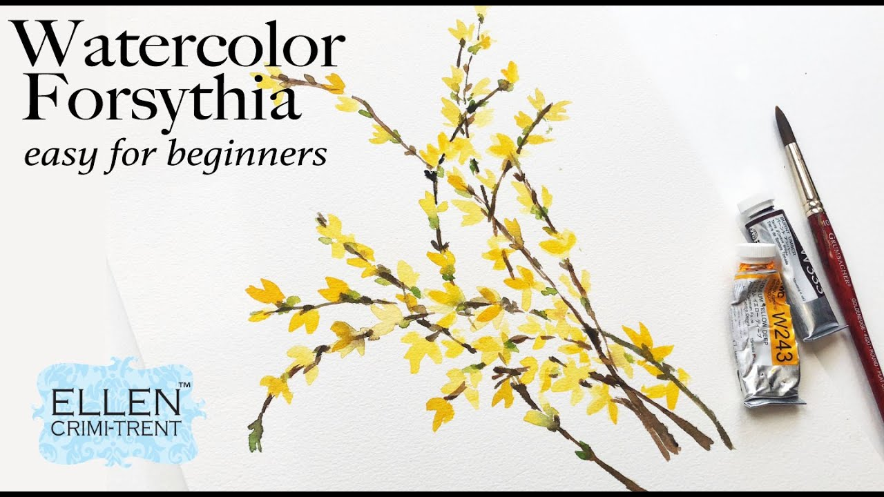 Watercolor Practice: Forsythia blooms