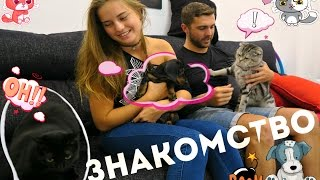 Знакомство собаки и кошек! Виски, Василек и Майя. Vlog 27.08.2016