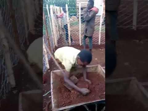 Children Labouring for Jesus Building Goat Fence in Moi's Bridge Kenya