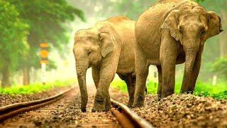 elephant at railway  station  स्टेशन पर हाथी