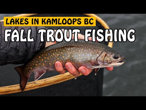 FALL RAINBOW TROUT & BROOK TROUT - Fly Fishing In Kamloops | Fishing With Rod