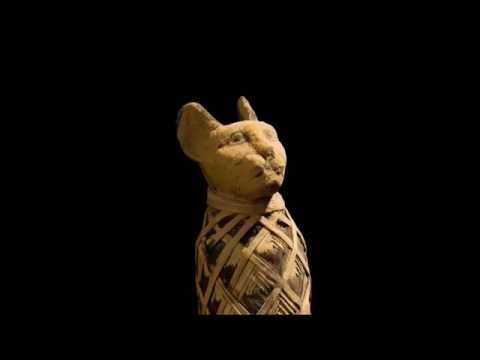 Peek Inside Cat Mummies With New X-ray Images