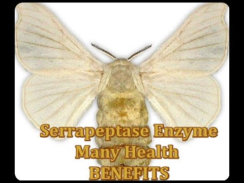 What Does Serrapeptase Do? YouTube