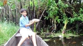 Pesca da traíra em Mucuri-BA ,Buguê e seu filho Gabriel