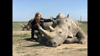 THE LAST TWO NORTHERN WHITE RHINOS IN THE WORLD