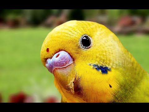 Funny Parrot Videos Compilation