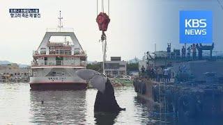 속초 해상서 13미터 '대형 향고래' 죽은 채 발견 /…