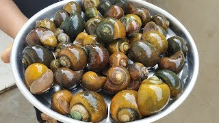 Awesome Recipe || Snails | Indian Live Snails Masala Curry | Cooking & Cleaning Snails Village Style