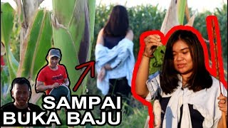 CEWE MANCING DI SAWAH SAMPAI BUKA BAJU ??? | SITUBONDO