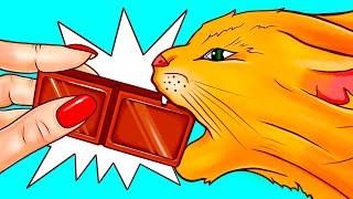 Kediler ve Köpekler Neden Çikolata ve Diğer Yiyecekleri Yiyemez?