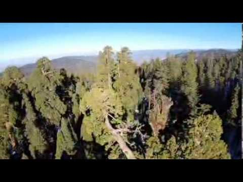 The Giants | Kings Canyon National Park | Sequoia National Park