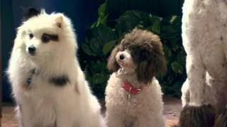 """Stan Rescues His Princess"" Sneak Peek   Dog With A Blog"