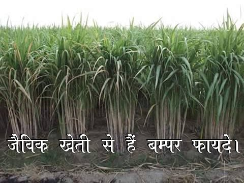 Benefits of Organic Farming in India