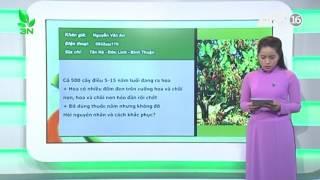 Phương pháp điều trị cây điều bị bệnh do nấm gây hại