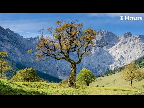 Relaxing Harp Music: Sleep, Meditation & Relaxation   Instrumental Background Music