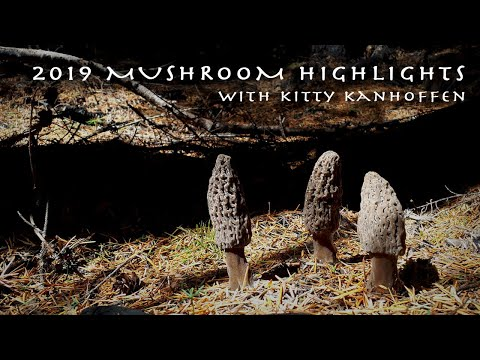 MORELS, PINE MUSHROOMS, CHANTERELLES - My Top Five MUSHROOM FORAGING HIGHLIGHTS In 2019!