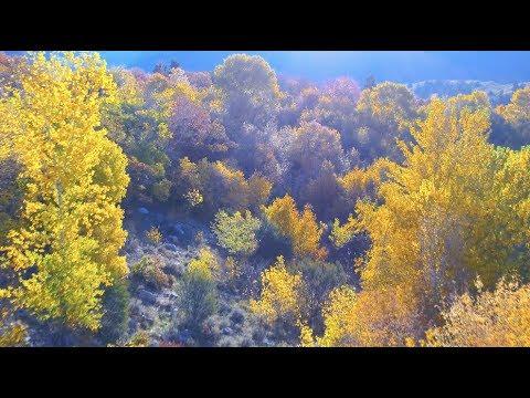 David Tolk  - Morning Light - From The Album Seasons