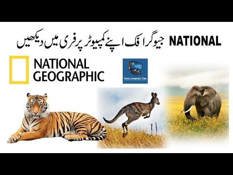 How To Free Live National Geographic On Your Computer Urdu Hindi
