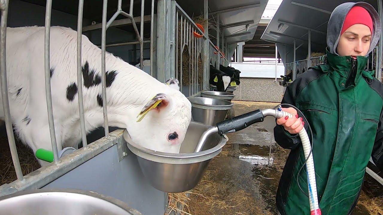 Farm #WithMe Animal Rescue 2021 BABY CALF Incredible Cow Milking Smart Farming DIY Chicken Egg