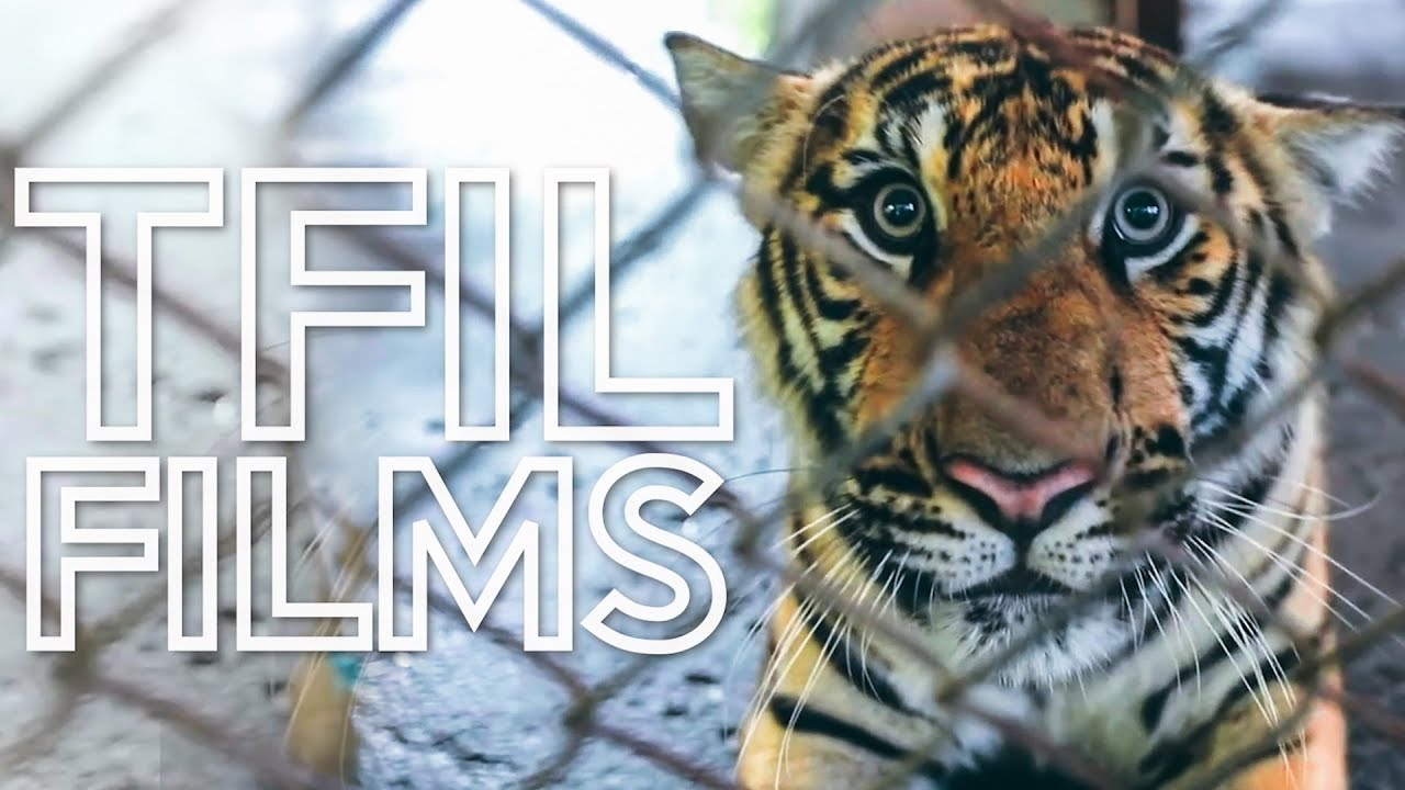 Welcome to TFIL Films - YouTube's First Non-Profit Documentary Channel